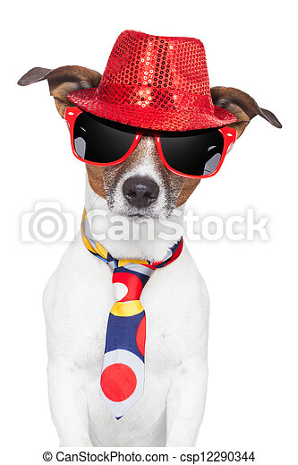crazy silly funny dog hat glasses  tie - csp12290344