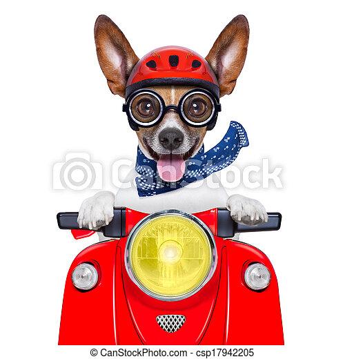 crazy silly motorbike dog - csp17942205