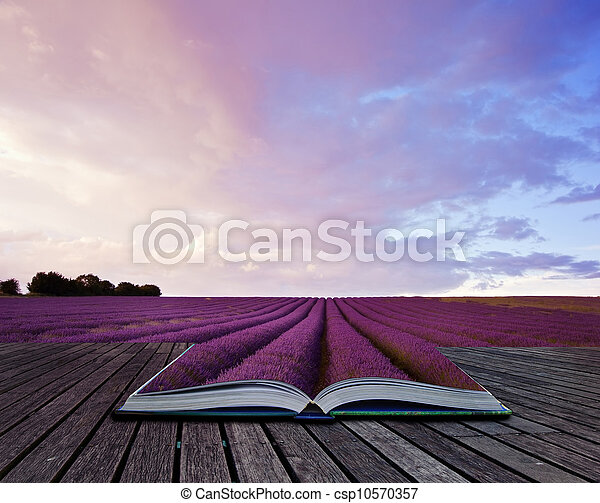 Creative concept image of lavender  landscape in pages of book - csp10570357