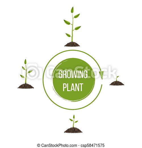 Creative Vector Illustration Of Growth Up Green Tree With Leaf Isolated On Background Business Cycle Diagram Development Art Design Seedling