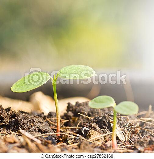 El brote verde está creciendo - csp27852160