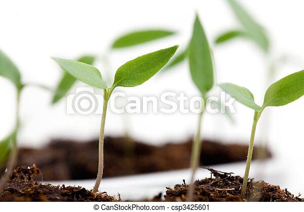 crecer, chile - csp3425601