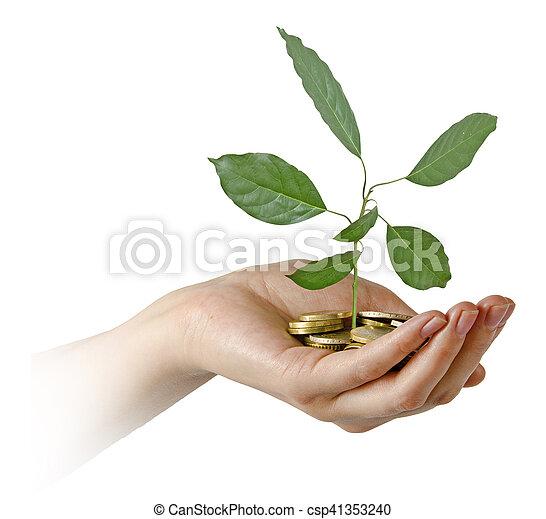 Aguacate creciendo de monedas - csp41353240