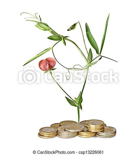 Flor creciendo de monedas - csp13226061