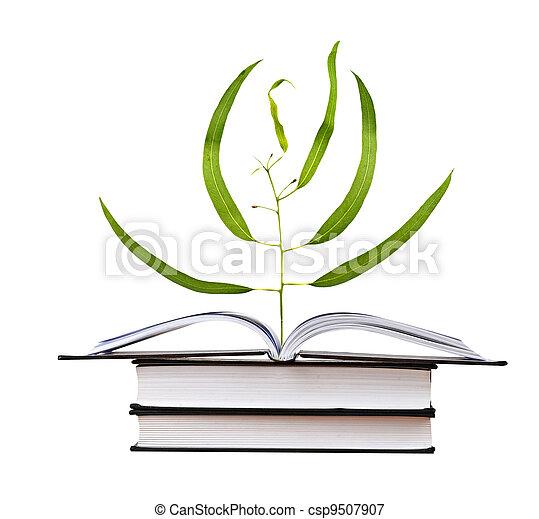 Semillas de árboles creciendo del libro - csp9507907