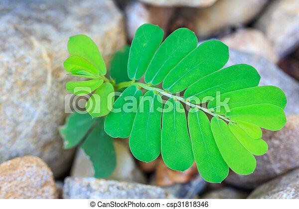 Semilla creciendo a través de las rocas - csp31818346