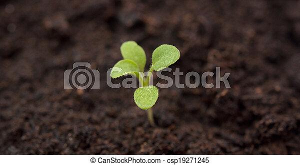 Planta creciendo desde el principio del suelo - csp19271245