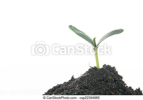 crecer, planta - csp22394985