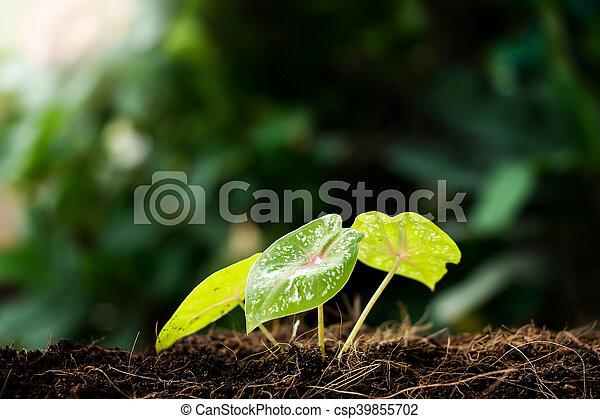 crecer, poco, planta, planta de semillero - csp39855702