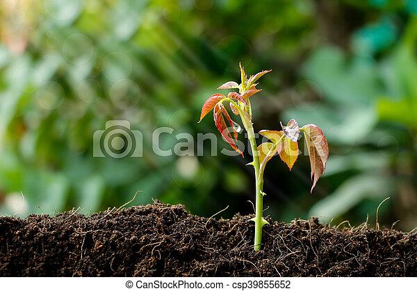crecer, poco, planta, planta de semillero - csp39855652