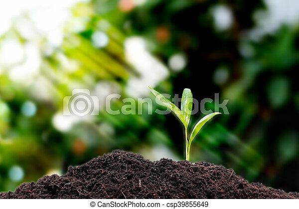 crecer, poco, planta, planta de semillero - csp39855649