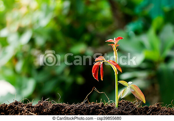 crecer, poco, planta, planta de semillero - csp39855680