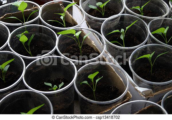 Semillas verdes creciendo en el suelo - csp13418702
