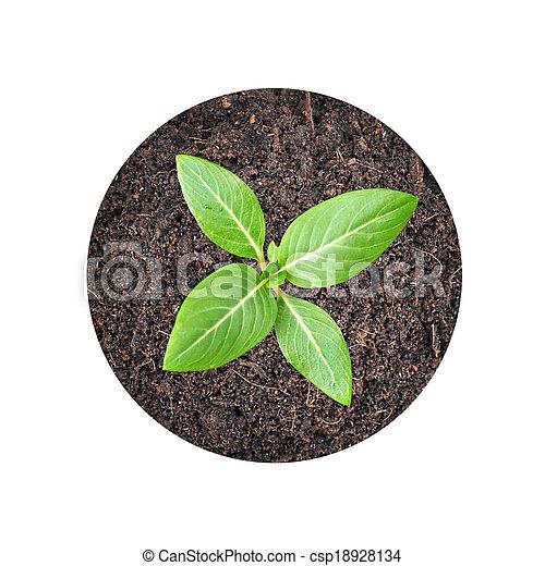 Pequeñas semillas verdes creciendo del suelo - csp18928134