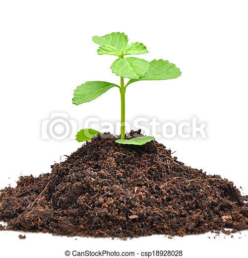 Pequeñas semillas verdes creciendo del suelo - csp18928028