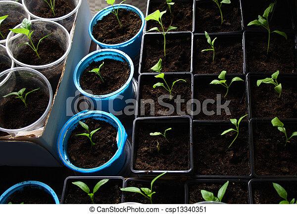 Semillas verdes creciendo en el suelo - csp13340351