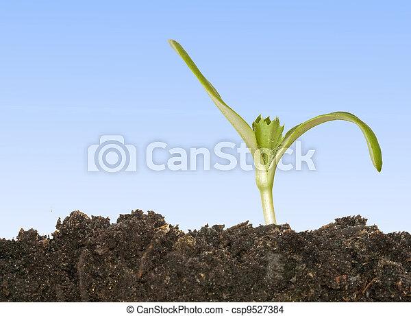 Las semillas crecen del suelo - csp9527384