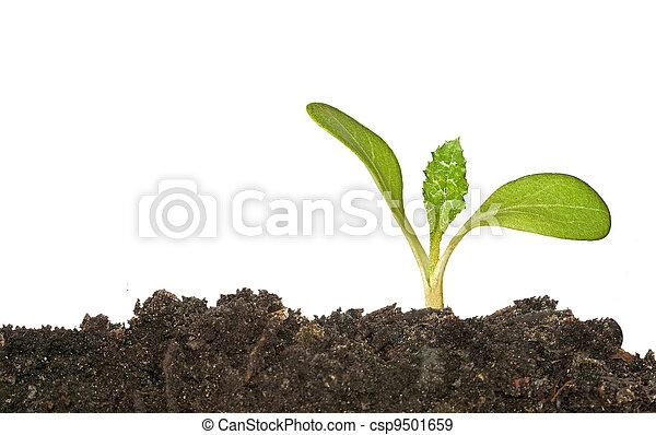 Las semillas crecen en el suelo - csp9501659