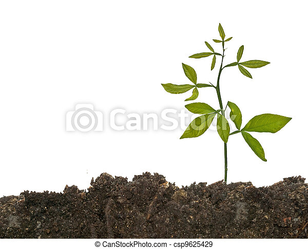 Las semillas crecen en el suelo - csp9625429