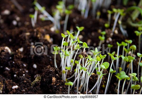 Semillas verdes creciendo fuera del suelo - csp9066957