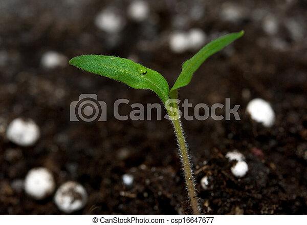 Planta creciendo de la tierra - csp16647677