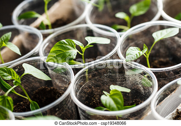 Semillas verdes creciendo - csp19348066