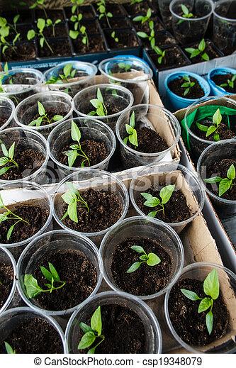 Semillas verdes creciendo - csp19348079