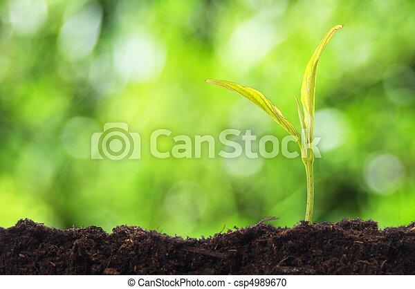 Crecimiento - csp4989670