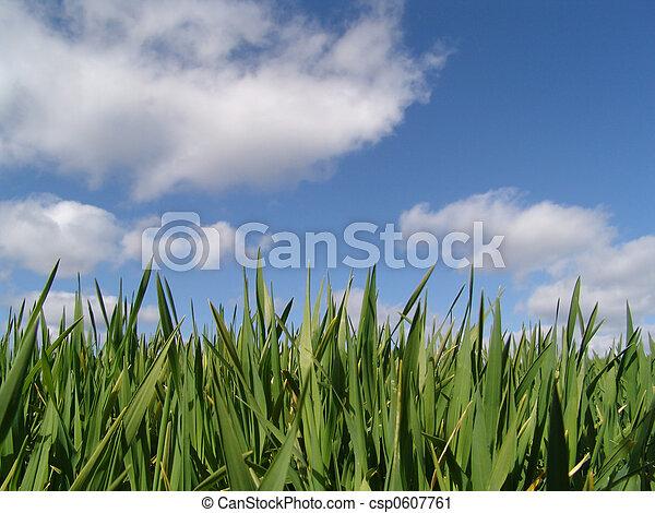 Crecimiento primaveral - csp0607761