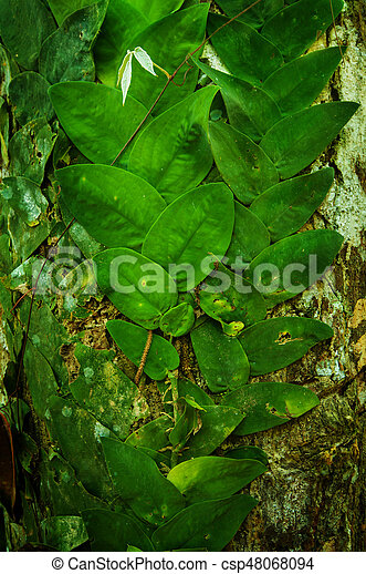 Creeping vines in jungle - csp48068094