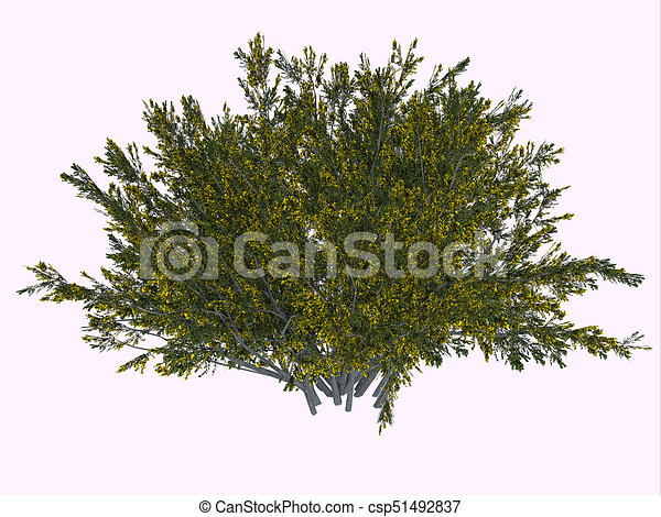 creosote bush the creosote bush is a desert plant and