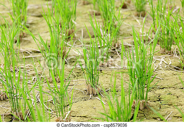 crescendo, solo, saída, verde, seedling - csp8579036