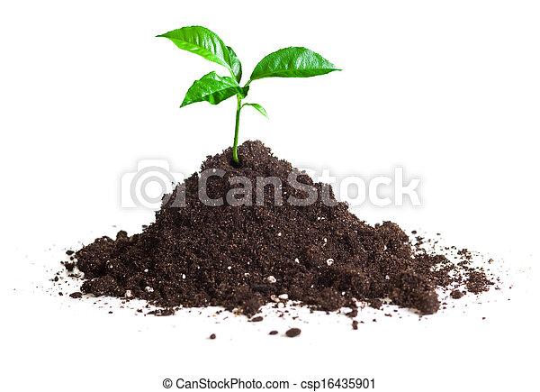 crescido, broto, isole, verde, solo - csp16435901
