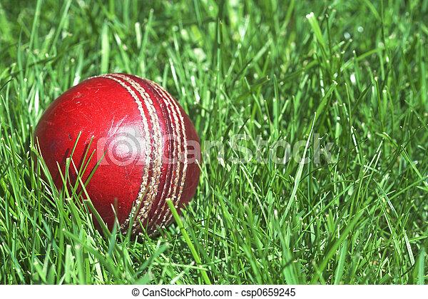 Cricket ball - csp0659245