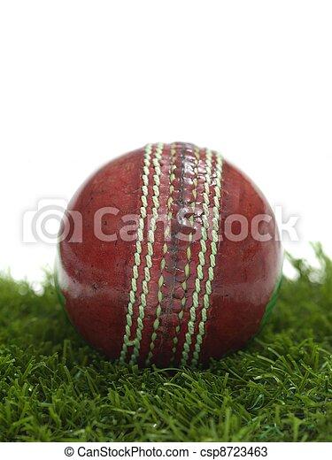 Cricket - csp8723463
