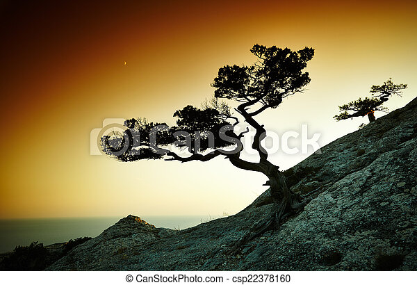 crimea, paesaggio albero, mare, sunset. - csp22378160