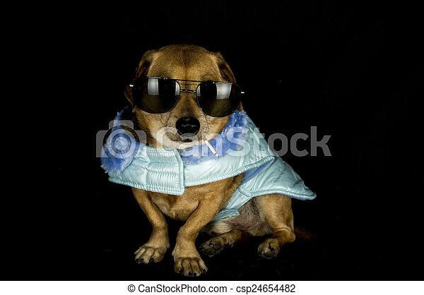 crimineel, dog - csp24654482