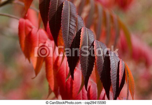Crimson Leaves of Autumn - csp29415590