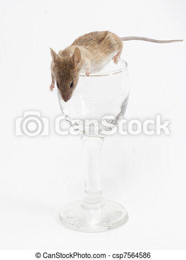 Un ratón en un cristal - csp7564586