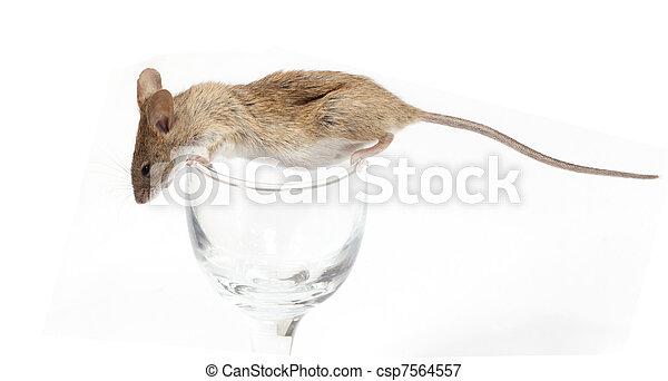 Un ratón en un cristal - csp7564557