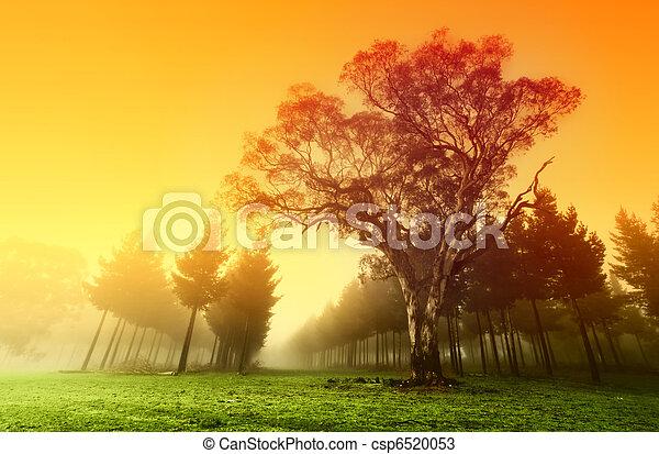 croccante, foresta, alba - csp6520053