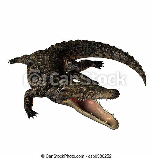 Crocodile - csp0380252