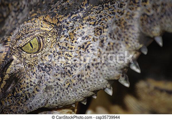 Crocodile eye - csp35739944