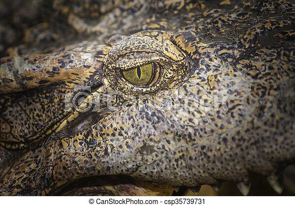Crocodile eye - csp35739731