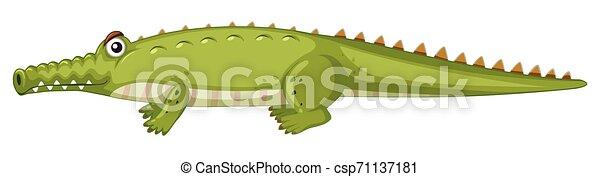 Crocodile on white background - csp71137181