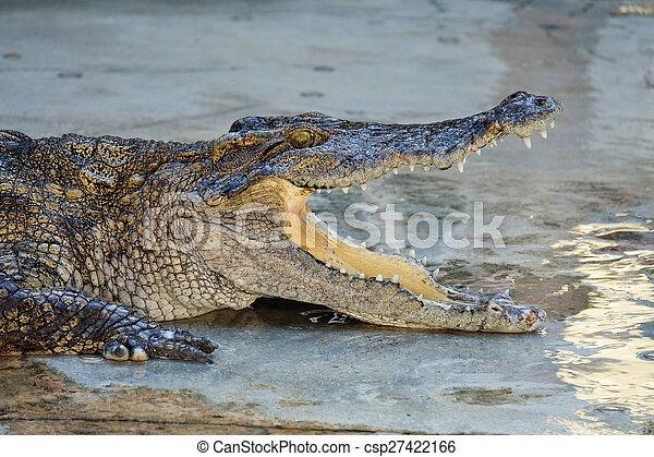 Crocodile - csp27422166