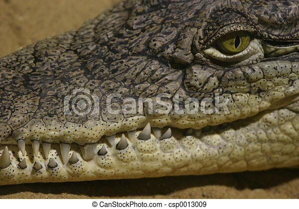 Crocodile - csp0013009