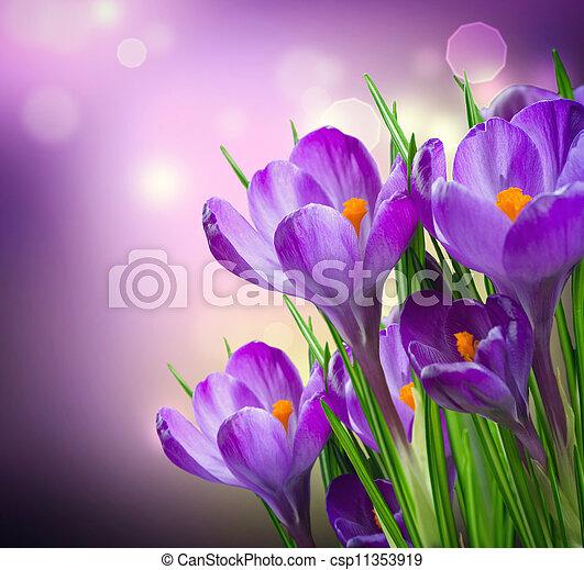 Crocus Spring Flowers - csp11353919