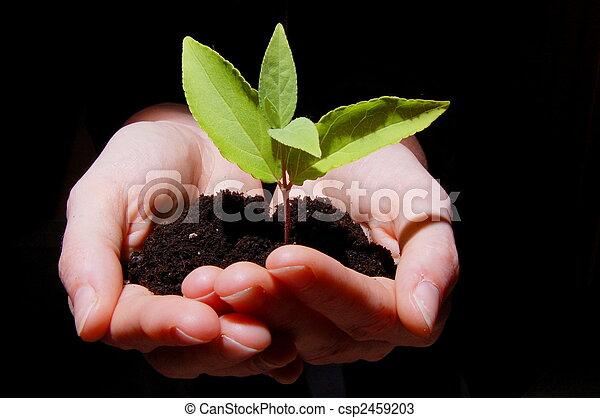 croissance - csp2459203