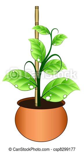 Croissant Pot Vigne Plante